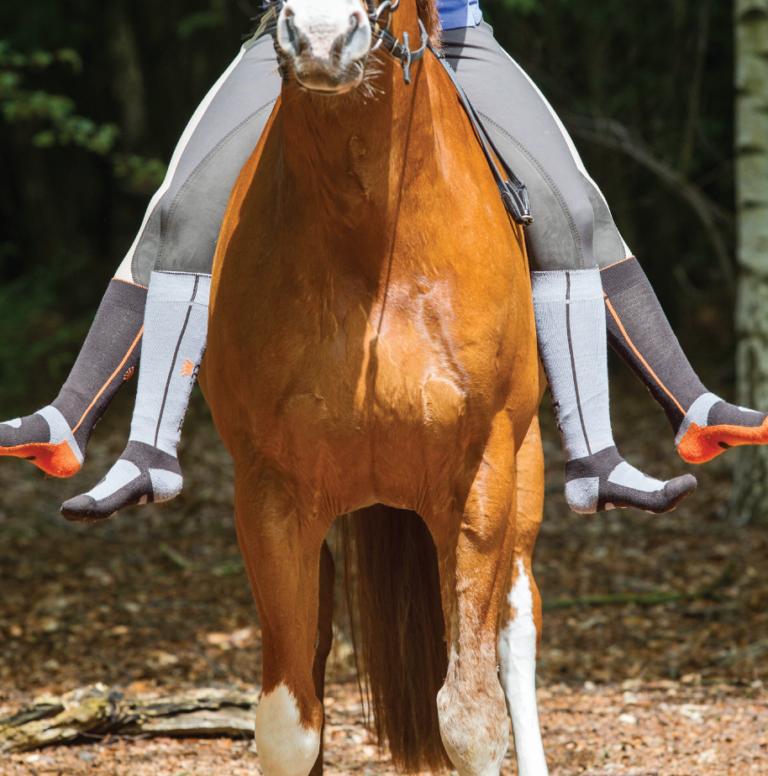 socks-paard